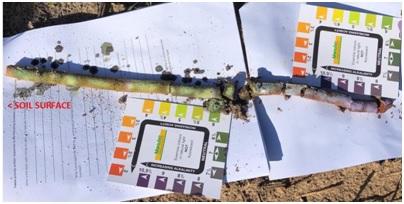Soil pH down the soil profile- Coorong District