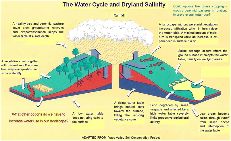 The Water Cycle and Dryland Salinity