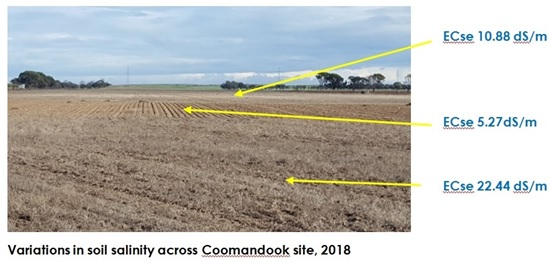 14 Variations in soil salinity across Coomandook site 2018