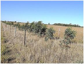 3. single tree line
