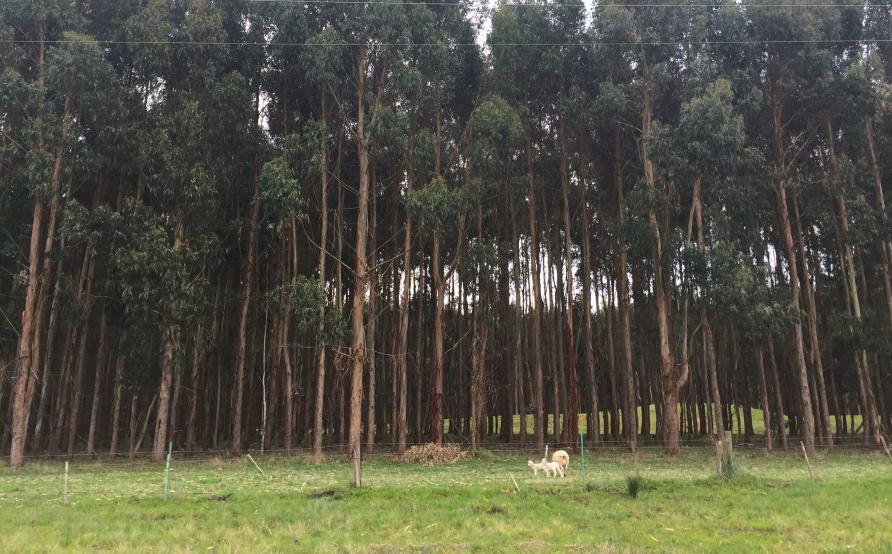 2. Farm Forestry Plantation